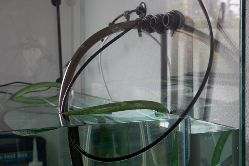 A bunch of hoses hanging inside the paludarium right now. A lot of hoses, and I haven't even put in any cables yet!