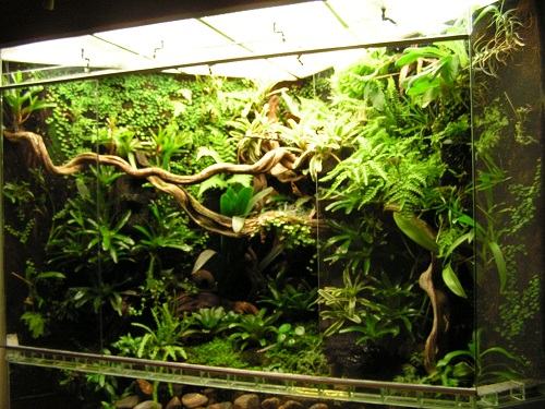 Nice view into a paludarium featuring the lianas I will be adding too - image by gifkikkerportaal.nl