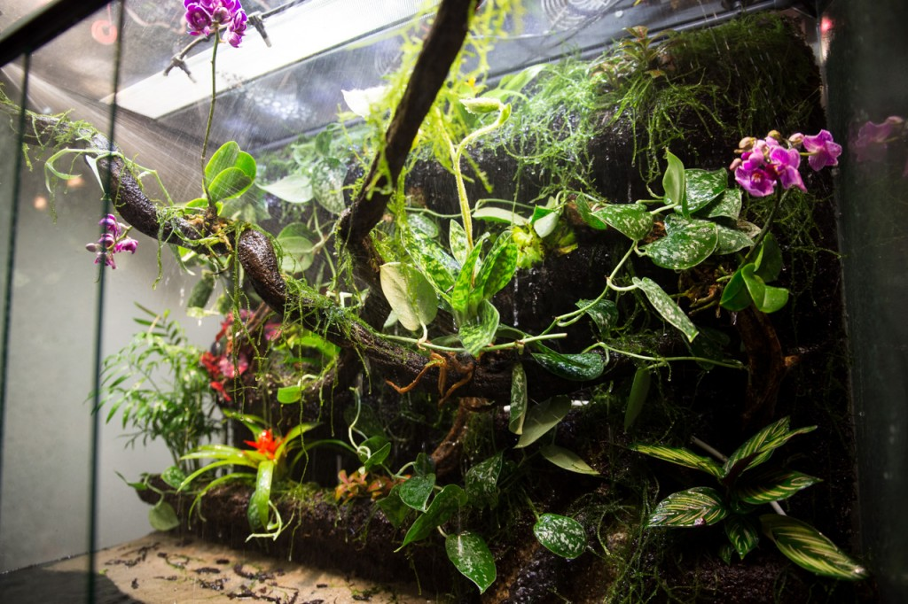 Testing the rain system. Note the jets of water shooting through the paludarium.